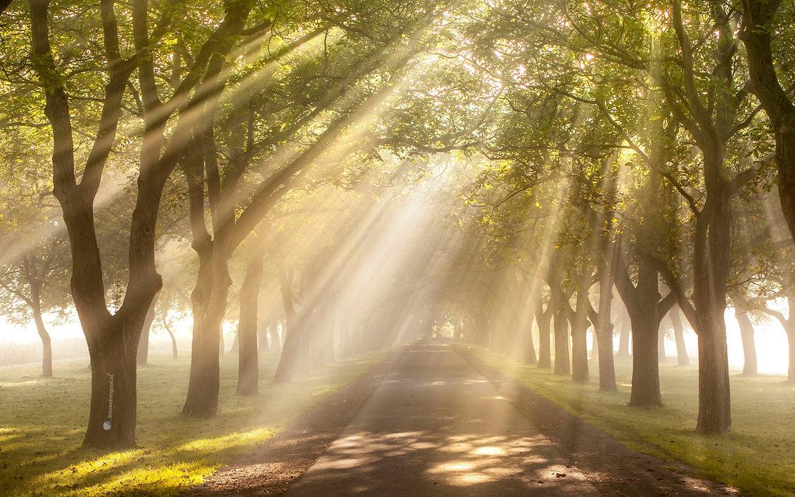 heavens_gate____________by_betuwefotograaf-dbsixol